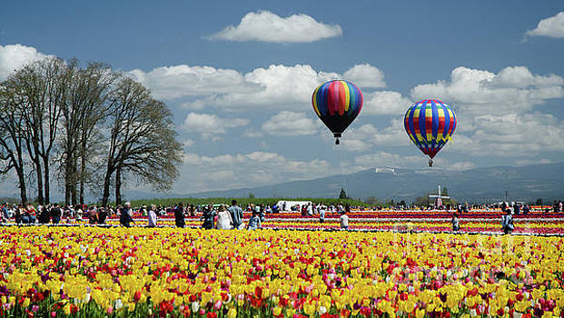 Baloons And Tulips by Nick Boren