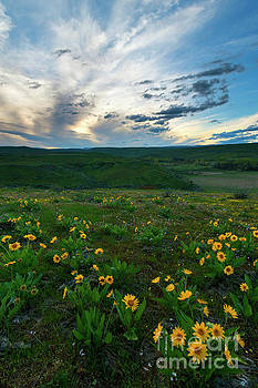 Balsamroot Sunset by Mike Dawson