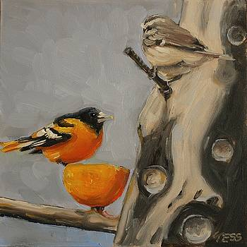 Baltimore Oriole by Tess Lehman