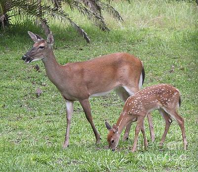 Bambi With Mom by Dodie Ulery
