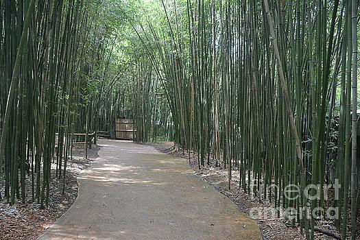 Bambo Pathway by Wanda-Lynn Searles