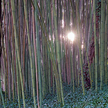 Bamboo and Ivy by Brian Shepard