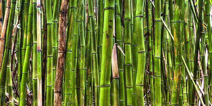 Bamboo by Dustin K Ryan
