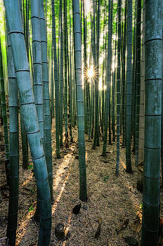 Bamboo forest at Arashiyama by Craig Szymanski
