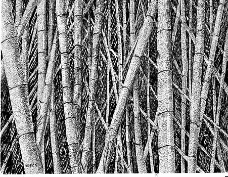 Bamboo Forest by Barney Hedrick