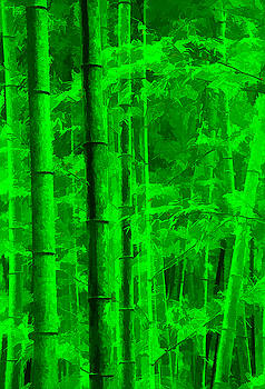 Dennis Cox - Bamboo Forest