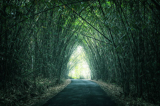 Bamboo Forest by Joana Kruse