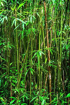 Kelley King - Bamboo