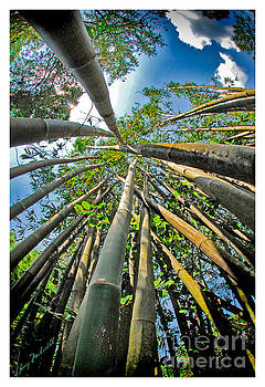 Bamboo by Larry Mulvehill