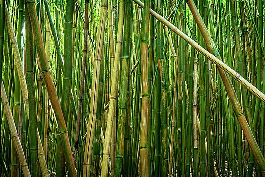 Kelley King - Bamboo Sticks