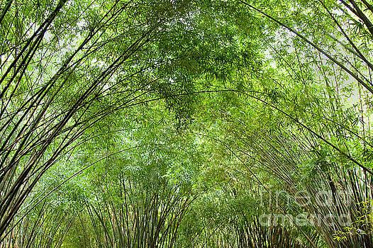 Bamboo Trees in Wangjianglou park in Chengdu China by Julia Hiebaum