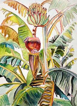Banana Bloom by Richard Jules