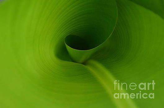 Banana Leaf - 0116 by Debra Kewley