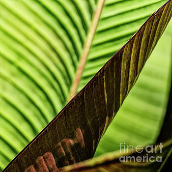 Banana Leaf Edge by Brad Allen Fine Art