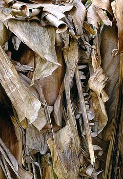 Banana Leaves by Steve Bisgrove