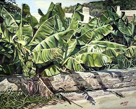 Banana Patch St. George's by Otto Trott