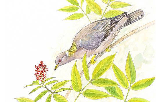 Band Tailed Pigeon by Shari Erickson
