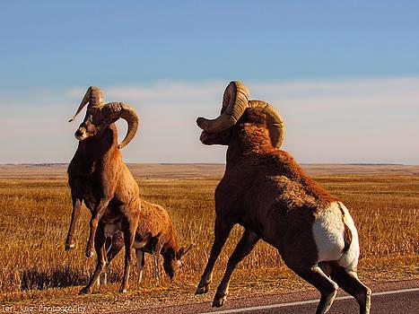 Bang of the Bighorn by Teri Ridlon