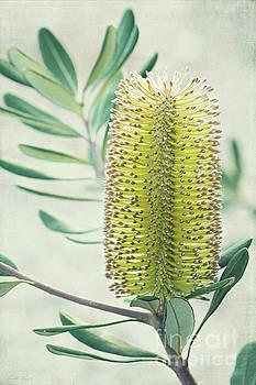 Banksia by Linda Lees
