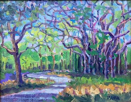 Banyan Tree at Riverbend Park by Ralph Papa
