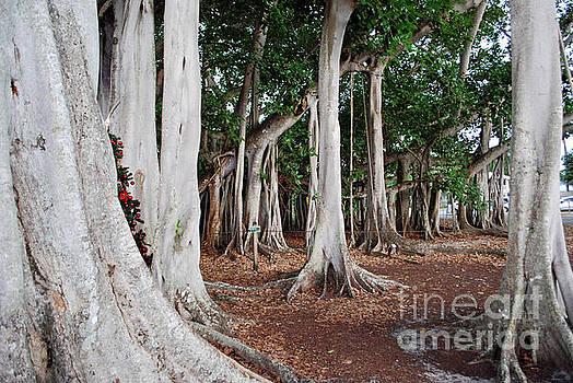 Gary Wonning - Banyan Trees