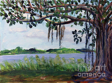 Banyon Tree at Lake Ida by Donna Walsh