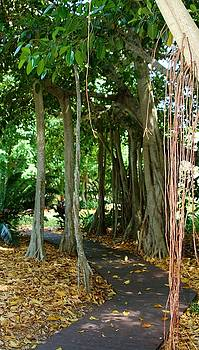Banyon Trees at Selby Gardens by Sheryl Unwin