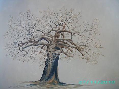Baobab 2 by Dion Halliday