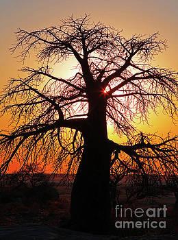 Baobab in the sunset, Africa wildlife by Wibke W