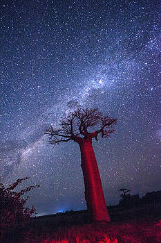 Baobab Milky Way by Matt Cohen