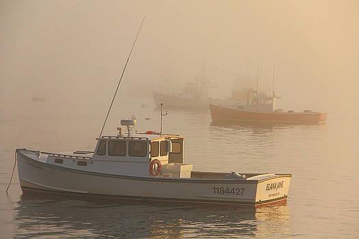 Bar Harbor Fleet by Brian Pflanz