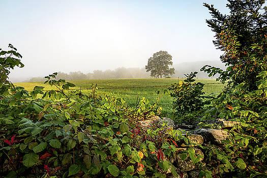 Misty Meadow by Jim Gillen