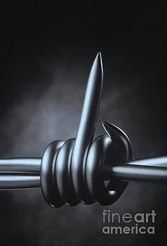 Barbed Wire by Hans Janssen