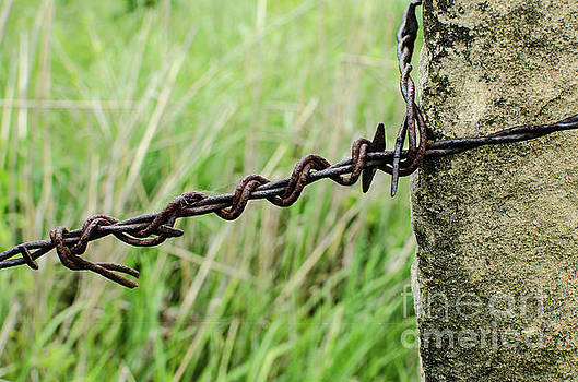 Barbed Wire and Stone by Kassie Nelson