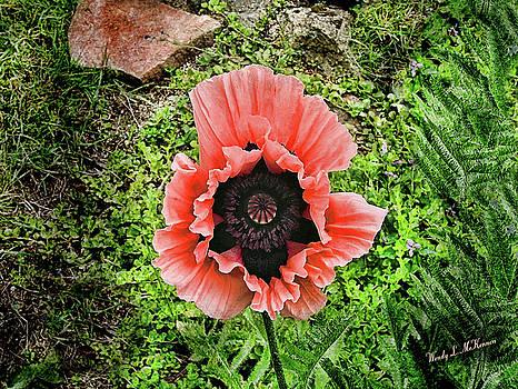 Barb's Garden Poppy by Wendy McKennon