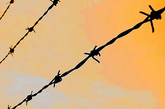 Barbwire at Night by Scarlett Chambers