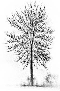Bare-branched tree by Karen Hermann
