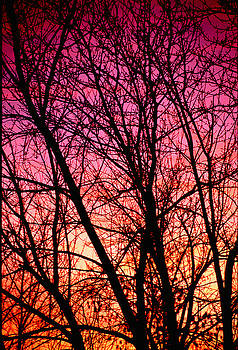 Bare Branches at Sunset by Jeremy Lewis