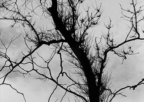 Bare Branches by John Gilroy