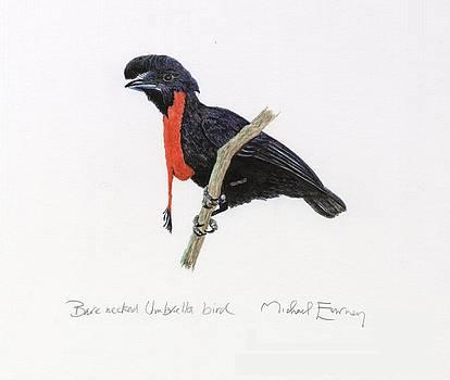 Michael Earney - Bare-necked Umbrella bird