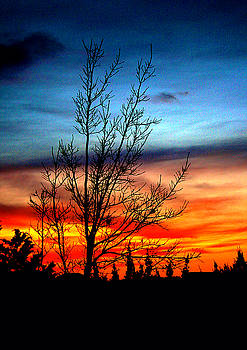 Bare Tree at Sunset by Kori Creswell