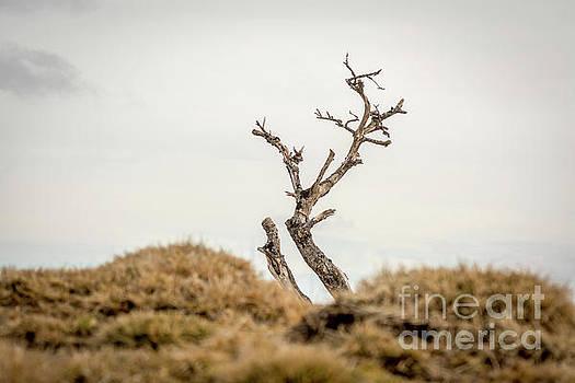 Bare tree by Bernard Jaubert