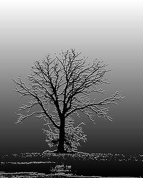 Bare Tree in Fog- PE filter by Nancy Landry