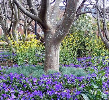 Bare tree surrounded by purple petunias by Elena Tudor