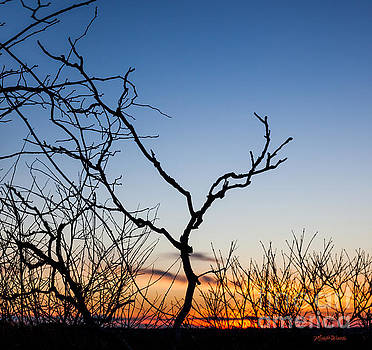 Michelle Wiarda - Bare Trees at Sunset