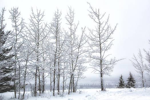 Bare Trees in Winter by Celine Pollard