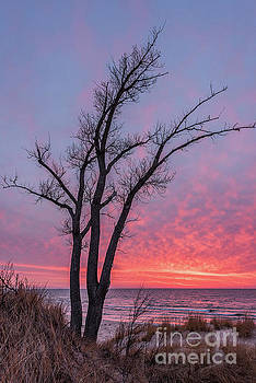 Bare Trees Overlooking a Beautiful Sunset by Sue Smith