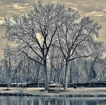 Bare Trees by Thomas McGuire