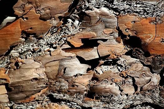 Bark Art by Theresa Willingham