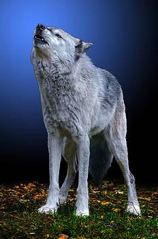 Bark At The Moon by Brian Stevens